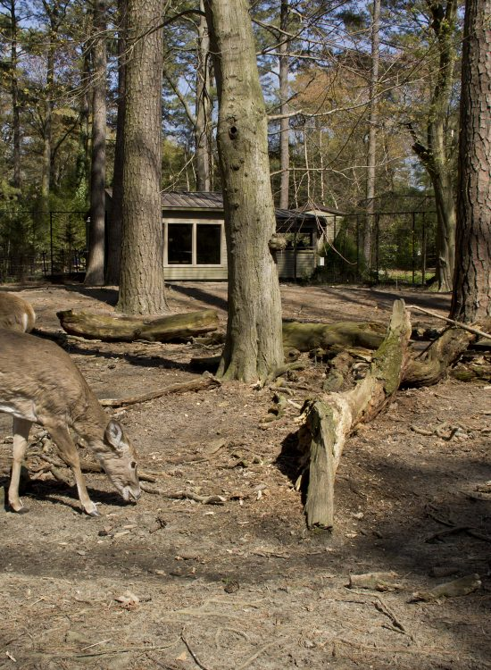 Deers at zoo