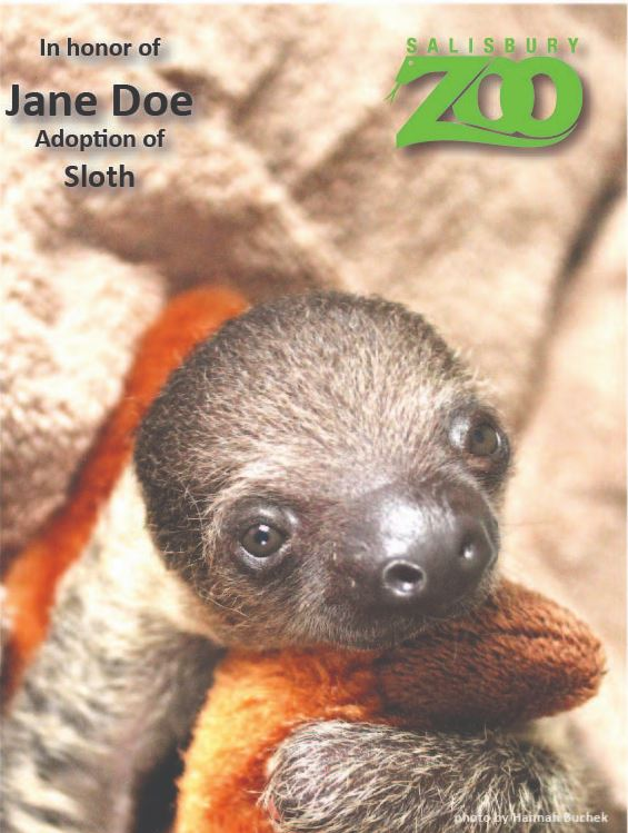 Baby Sloth Adoption